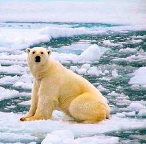 Alaska is home to polar bears